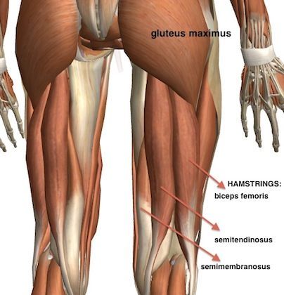 Tight Hamstrings? Exercises and Stretches to Develop ...
